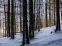 1661 - Raquettes à neige  dans le massif vosgien -  massif du Markstein - Avec Philippe